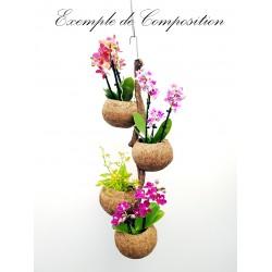 Mangrovre Coco 60 cm 4...